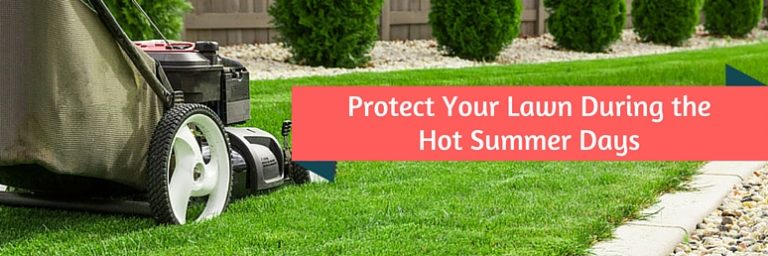 Protect lawn during summer days