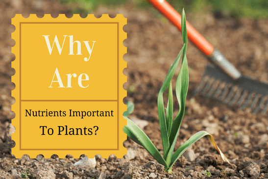 Why nutrients are important to plants