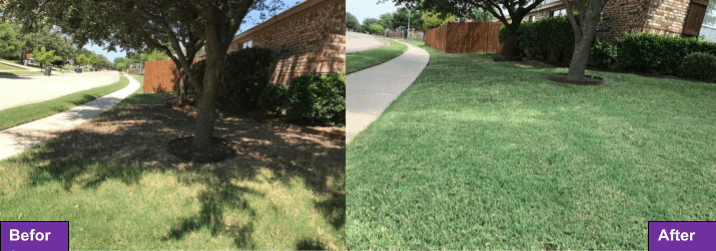 Before and after fescue