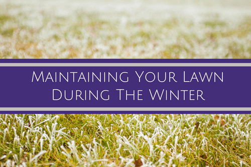 Maintaining lawn during winter