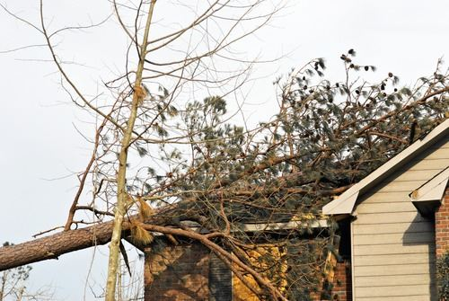 Tree branch falling on roof of home
