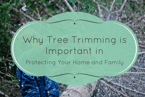 Tree trimming importance