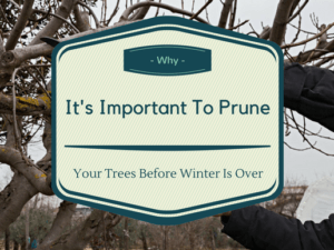 Tree Pruning in winter